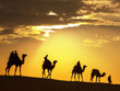 Camel Safari Tour in India