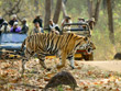 Central India Wildlife Tour | Wildlife of Central India