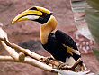 Hornbill Kumarakom Bird Sanctuary | Kumarakom Bird Sanctuary Tours | Kumarakom Wildlife