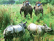 Elephant Safari and Rhino in Chitwan